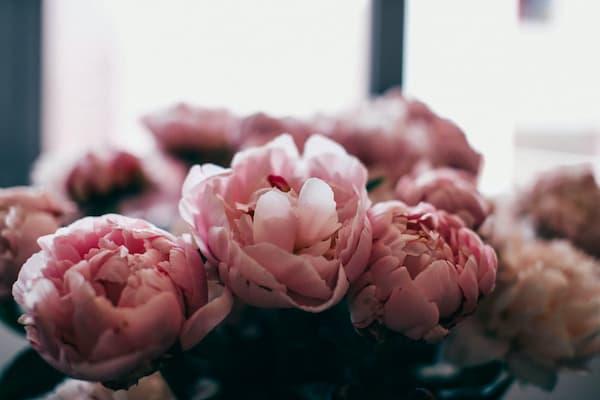 Las flores que necesitas para enviar a un tanatorio
